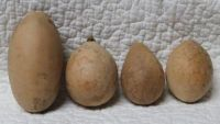 GOURDS - ROUND & OVAL  MISCELLANEOUS SURFACES